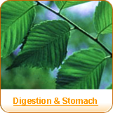 Digestion & Stomach